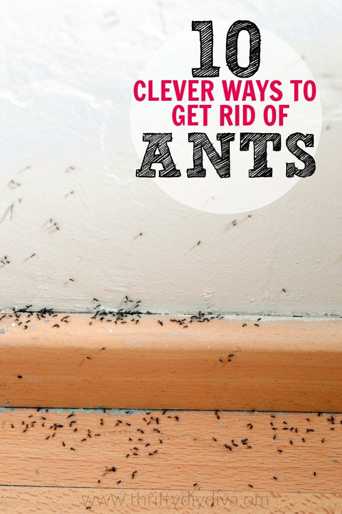 Top 10 DIY Ways to Get Rid of Ants